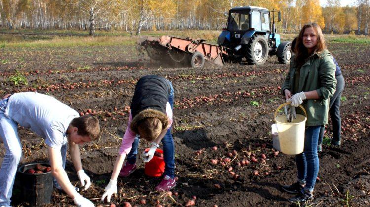 Работницам в селе продлят рабочий день
