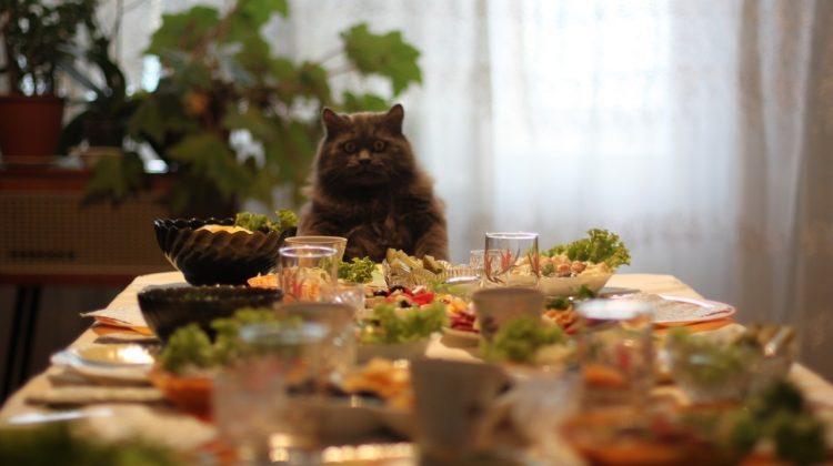 Разработка СанПиНа для домашних животных в отелях и общепите